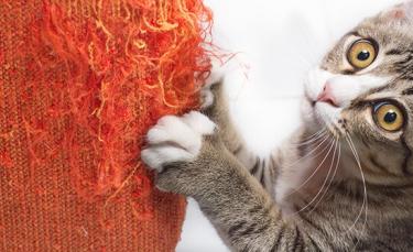 """Illustration : """"5 astuces pour éviter les griffures de chat sur le mobilier"""""""