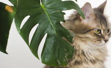 """Illustration : """"4 solutions pour éviter que votre chat mange les plantes"""""""
