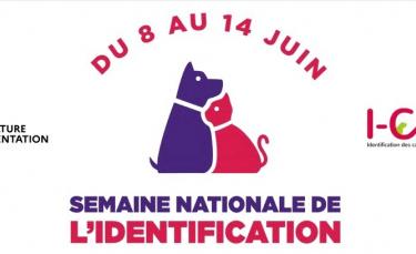 """Illustration : """"La Semaine nationale de l'Identification des chiens et des chats se tiendra du 8 au 14 juin"""""""