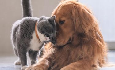 """Illustration : """"6 astuces pour améliorer la cohabitation entre votre chat et votre chien"""""""