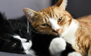 """Illustration : """"5 astuces pour améliorer la cohabitation entre vos chats"""""""