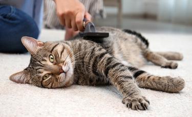 """Illustration : """"5 astuces pour entretenir le pelage de son chat"""""""