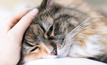 """Illustration : """"10 signes qui montrent que votre chat est malade"""""""