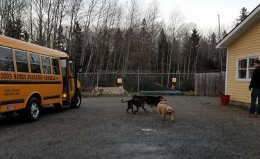 """Illustration : """"Pour se rendre dans leur petit coin de paradis, ces chiens ont droit à un transporteur particulier """""""