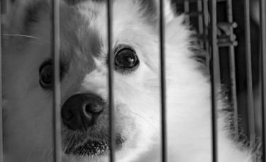 """Illustration : """"Chine : vers un arrêt du festival de la viande de chien à Yulin ?"""""""
