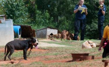 """Illustration : """"Récupérés dans un camp de fortune, ces 300 chiens de combats ne croyaient plus en rien"""""""