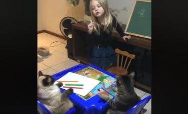 """Illustration : """"Meilleurs amis, cet enfant peut compter sur son chat quand il s'agit de soutien scolaire ! """""""
