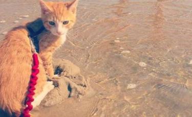"""Illustration : """"Depuis qu'il a été sauvé d'une tempête, ce chaton s'est découvert une passion pour l'eau !"""""""