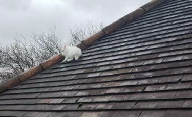 """Illustration : """"Le sauvetage improbable d'un lapin qui s'est mystérieusement retrouvé sur le toit d'une maison ! """""""
