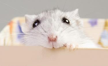 """Illustration : """"Fabriquer une cage pour son hamster"""""""