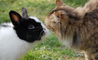 """Illustration : """"La cohabitation entre le lapin et le chat"""""""
