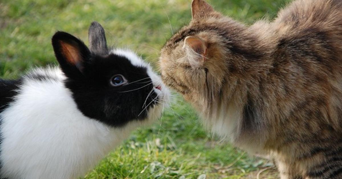 rencontre entre 2 lapins nains meilleur site de rencontre