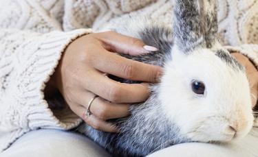 """Illustration : """"Comment manipuler et caresser un lapin ?"""""""