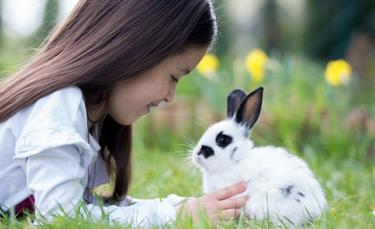 "Illustration : ""Adopter un lapin"""