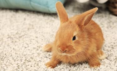 """Illustration : """"Fabriquer une cage pour son lapin """""""