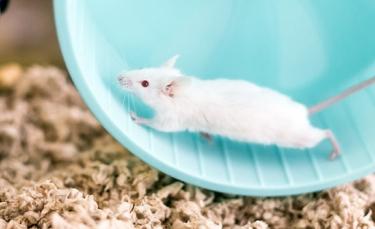 """Illustration : """"Nettoyer la cage de la souris """""""