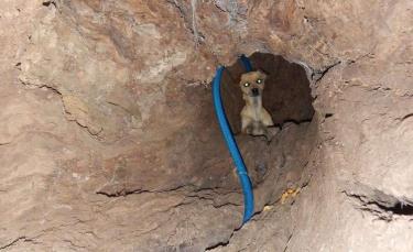 """Illustration : """"Abandonné, ce chien vivait dans un tronc d'arbre, une association lui enseigne la confiance et l'amour ! """""""