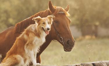 """Illustration : """"Combien coûte un cheval ?"""""""