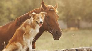 Illustration : Combien coûte un cheval ?