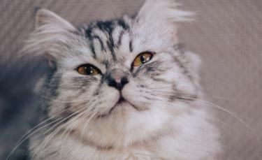 """Illustration : """"6 démonstrations d'amour que votre chat peut exprimer pour dire qu'il tient à vous !"""""""