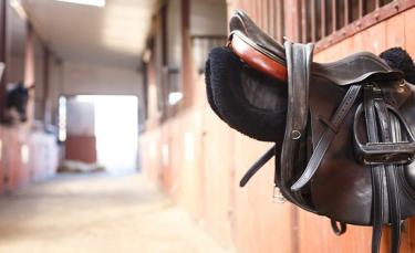 """Illustration : """"Choisir l'équipement de son cheval"""""""