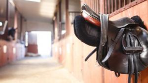 Illustration : Choisir l'équipement de son cheval