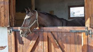 Illustration : Le cheval en demi-pension