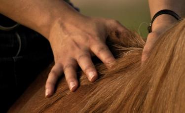 "Illustration : ""La dermite estivale chez le cheval"""