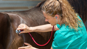 Illustration : Choisir le vétérinaire de son cheval