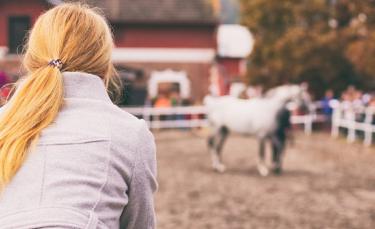 """Illustration : """"La vente d'un cheval et les vices rédhibitoires"""""""