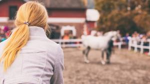 Illustration : La vente d'un cheval et les vices rédhibitoires