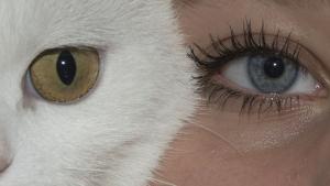 Illustration : La relation que vous entretenez avec votre chat serait-elle similaire à la relation « parent-enfant » ?
