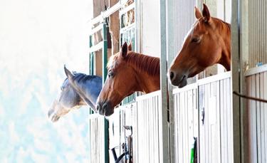 """Illustration : """"Choisir l'hébergement de son cheval"""""""