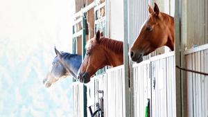Illustration : Choisir l'hébergement de son cheval