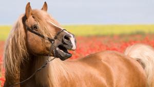 Illustration : Les moyens de communication du cheval