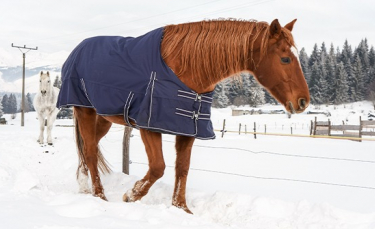 "Illustration : ""Protéger son cheval du froid """