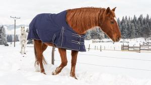 Illustration : Protéger son cheval du froid