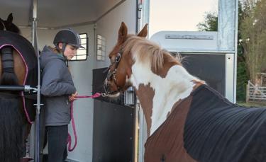 "Illustration : ""Transporter son cheval"""