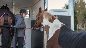 Illustration : Transporter son cheval