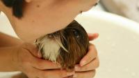 Illustration : Laver son chien : les étapes à suivre pour un bain efficace