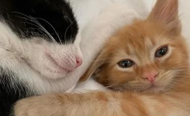 """Illustration : """"Un chaton à 3 pattes découvre l'amitié après avoir lutté pour survivre dans sa fratrie !"""""""