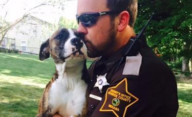 """Illustration : """"Une chienne Pitbull attend vainement l'arrivée de ses propriétaires dans le parc où ils l'ont abandonnée et découvre l'amour dans les bras du policier venu à son secours ! """""""