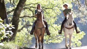 Illustration : Choisir un cheval d'endurance