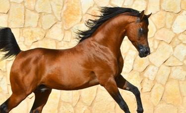 """Illustration : """"Qu'est-ce qu'un cheval plein papier ?"""""""