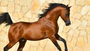 Illustration : Qu'est-ce qu'un cheval plein papier ?