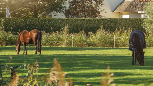 Illustration : Héberger son cheval chez soi