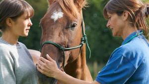 Illustration : L'importance de la visite d'achat du cheval