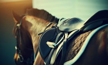 """Illustration : """"Choisir la selle de son cheval """""""