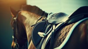 Illustration : Choisir la selle de son cheval