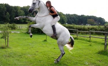 "Illustration : ""Mon cheval se cabre : que faire ? """